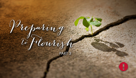 preparing to flourish - part 3